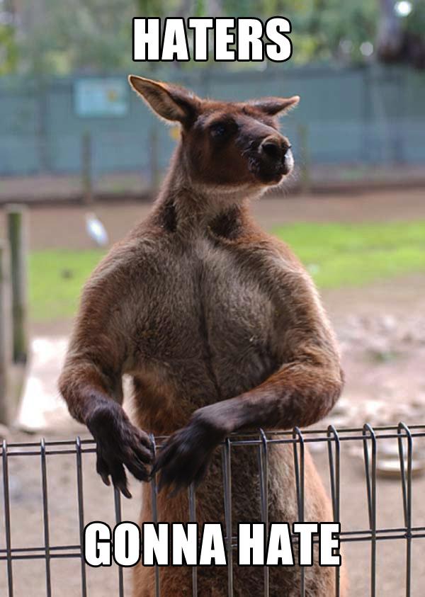 Haters Gonna Hate Smug Kangaroo Discourse